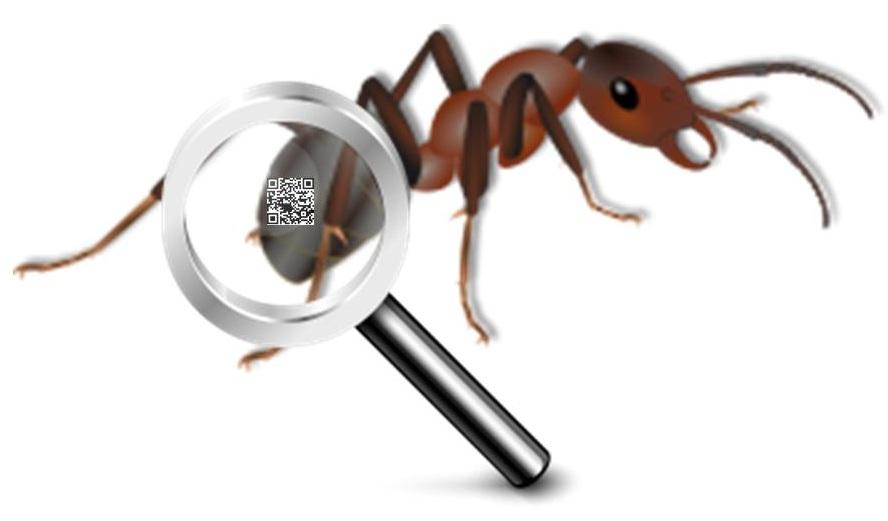 QR Codes Ants Study