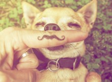 Wearable Technology - Dogs