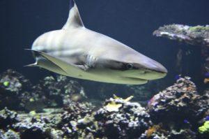 shark cool wearable technology